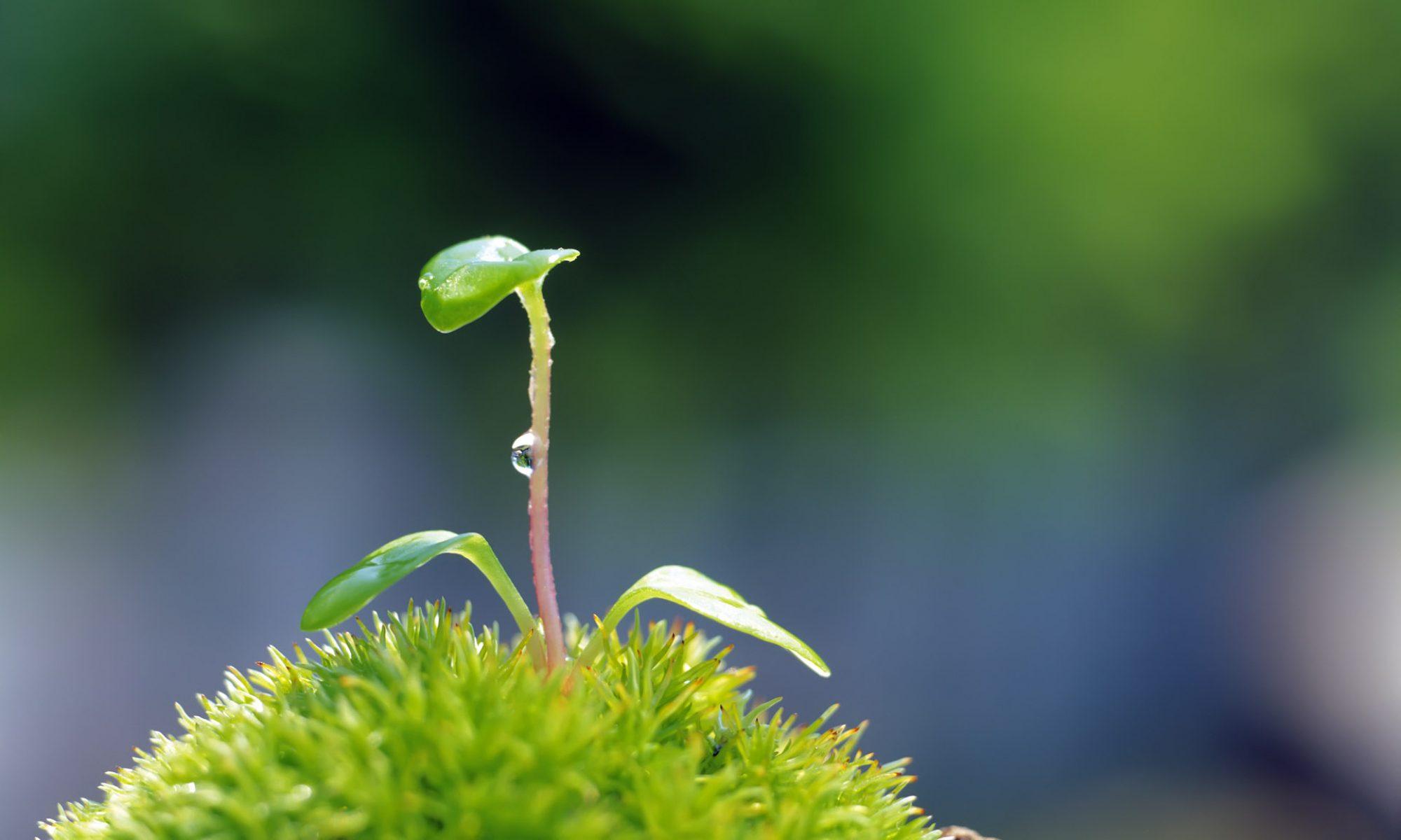En VerdeSTI nos dedicamos a integrar conceptos innovadores, seguros y rentables.